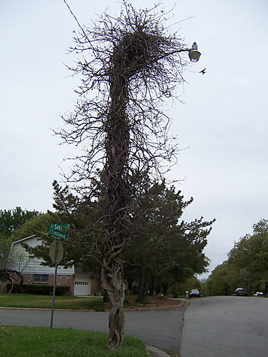 Treelamppost1