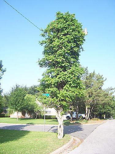 Treelamppost