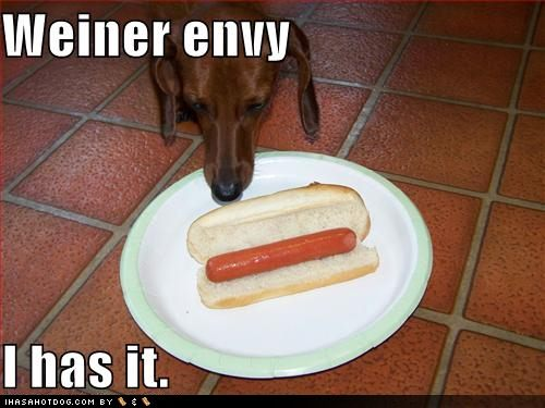 Funny-dog-pictures-dog-has-envy