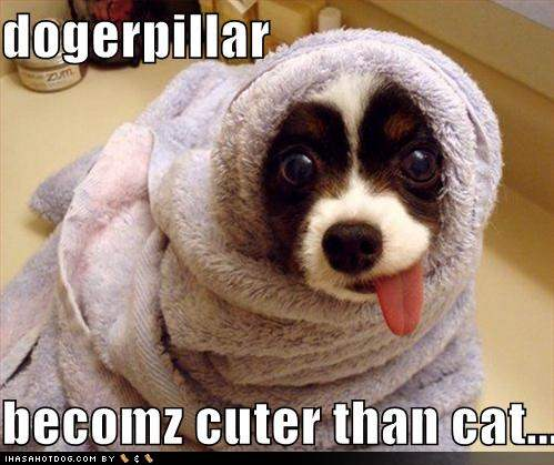 Funny-dog-pictures-dogpillar