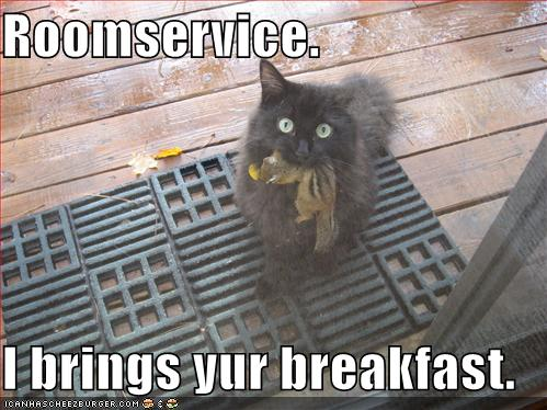 Funny-pictures-roomservice-cat-brings-you-breakfast
