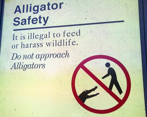 Aligatorhand(anonymous)