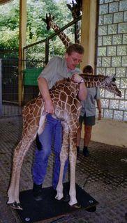 Giraffeonscale