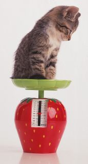 Kittyonapplescale
