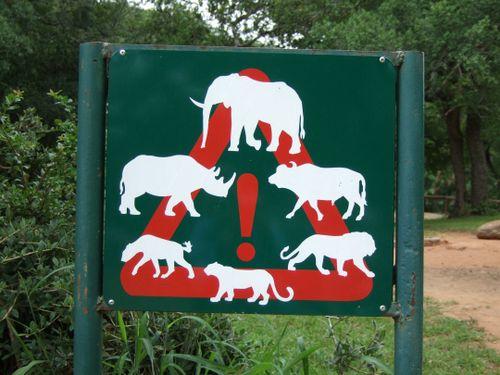 Lionsandtigersandbears(KellyW)Safrica