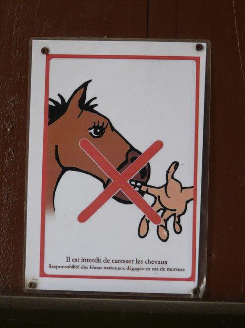 HorsebitingFrance(SonyaP)
