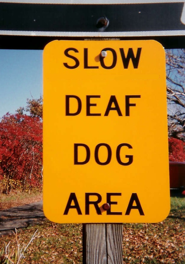 Deaf Dog(MattZ)