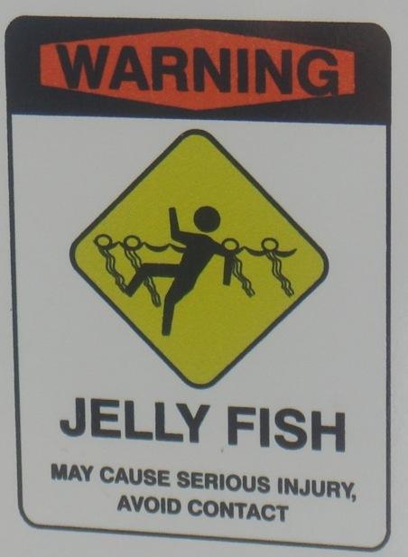 Jellyfish(ChristineO)UAE