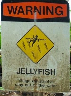 Jellyfish(LauraS)