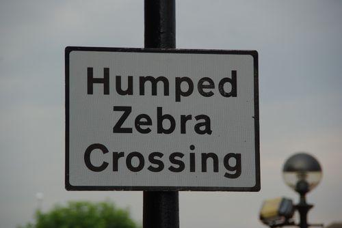 Humpedzebra(AZacher)England