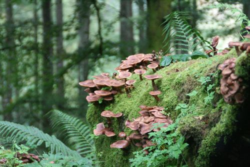 Glenariffmushrooms
