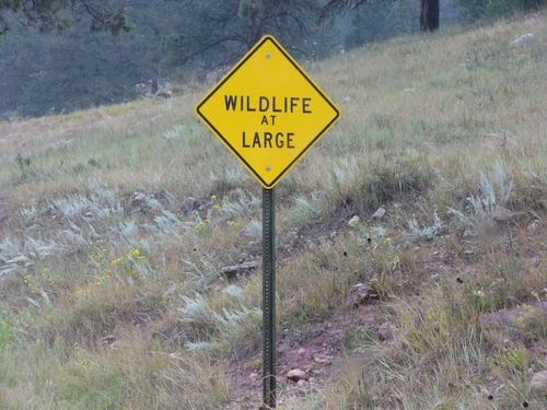 Wildlifeatlarge(JackS)