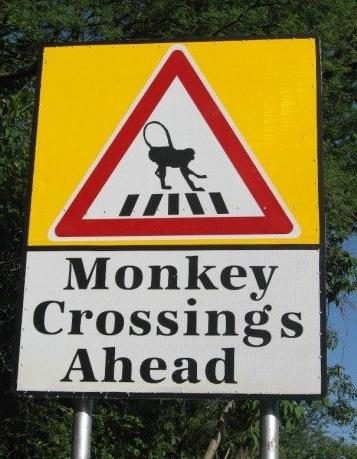 Monkeyscrossing(haadiIslamabad)