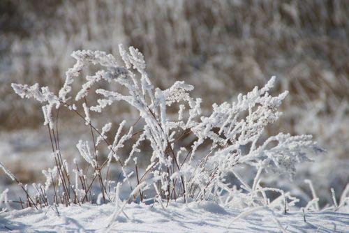 Coldgrass