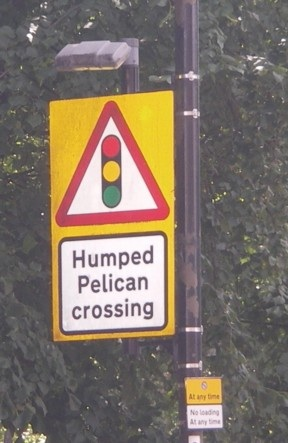Humpedpelicancrossing(BillW)