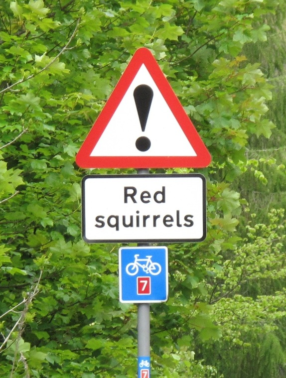 Redsquirrels(MistyM)Scotland