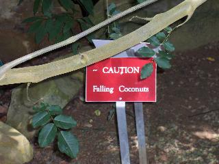 Coconuts(TaylorS)