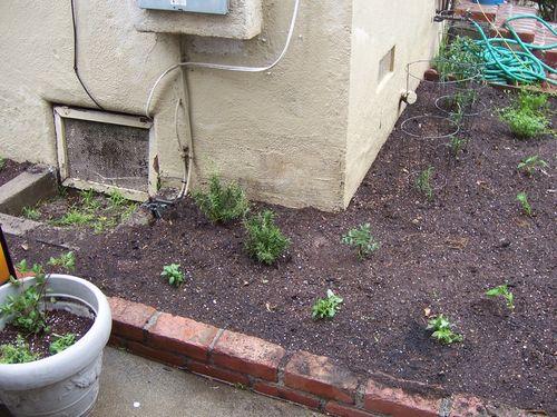 Garden2010b