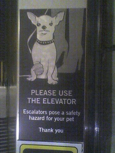Escalator:petsafety(JodiK)