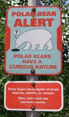 PolarBear2(CarlyS)