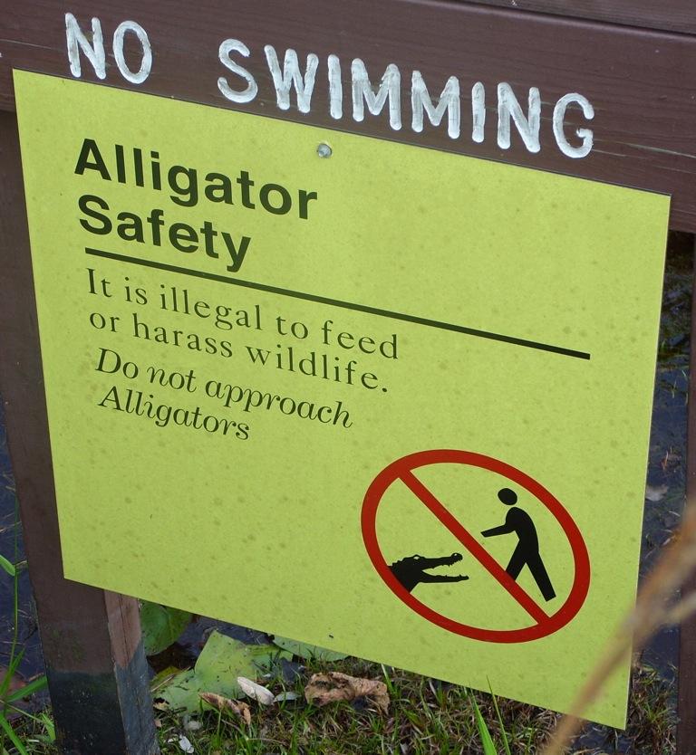 Alligator(DanA)
