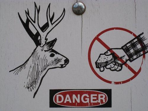 Deerattack1(Jim&NancyR)