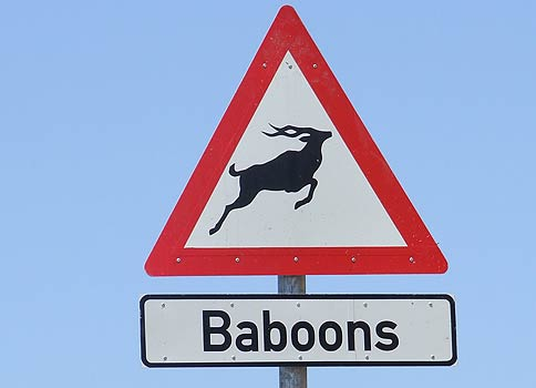 Baboons(MichaelG)