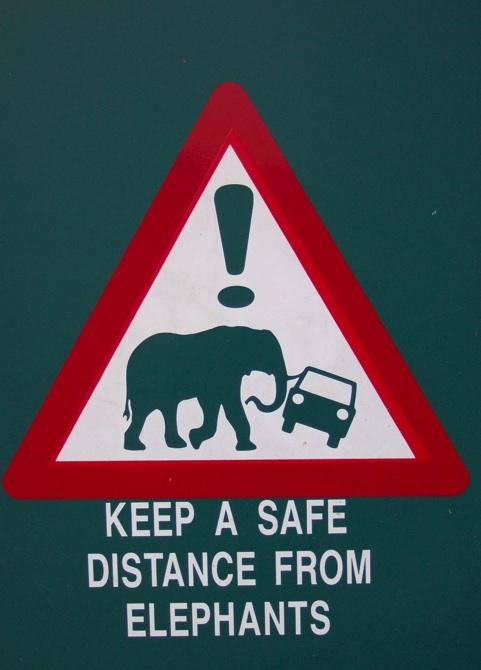 Elephants (KellyW)