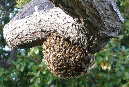 Beeswarm2
