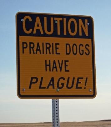 Plague(TimD)