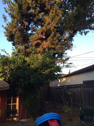 TreeBefore2