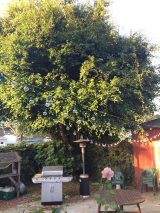 TreeBefore1