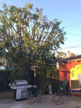 TreeAfter1