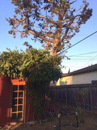 TreeAfter2