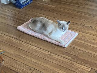 Floorcat